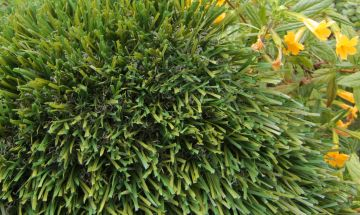 Artificial Grass Double S-61