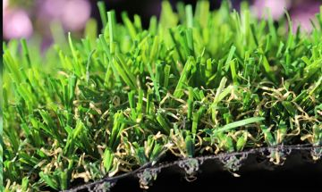 Artificial Grass Evergreen-54 Natural